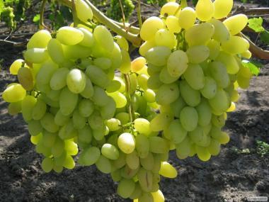 Продаем свежий вкусный спелый крупный виноград