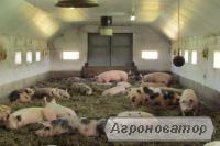 Система вентиляції для свинарників, б/в система вентиляції для свинарн