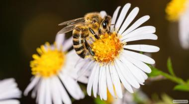 Продам пчелопакеты или пчелосемьи
