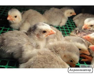 Литература по кормлению и выращиванию птицы