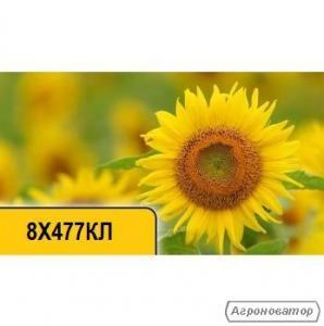 Семена подсолнечника 8X477КЛ