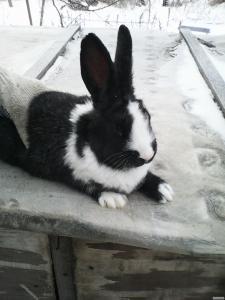 Продам кролят