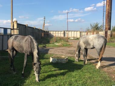 Продам пару коней каретних