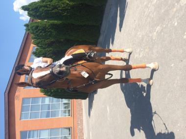 Продажа обмін коней
