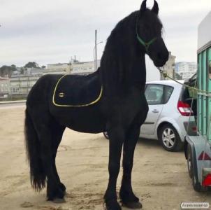Коні ваговози  породи Російський ваговоз