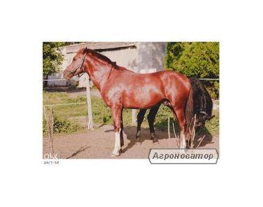 Лошадь 5 лет