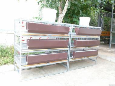 В НАЯВНОСТІ спеціалізовані клітки для перепілок, курей, бройлерів.