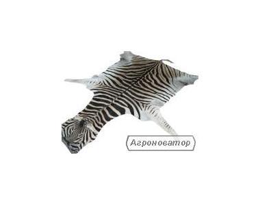 Продам шкуру зебри, крокодила, антилопи!