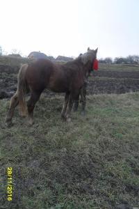 лошадь 4 года