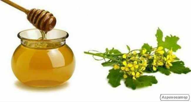 Рапсовый мёд, Горчичный мёд, Гречишный мёд, Кориандровый мёд.....