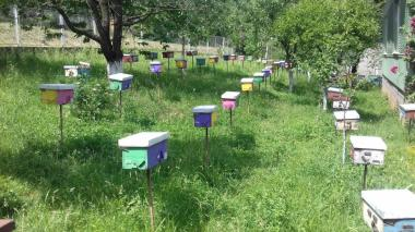 Предлагаю плодные меченые пчеломатки карпатки