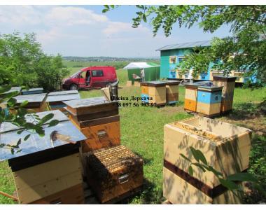 Продам бджолопакети карпатки. Доставка по Україні
