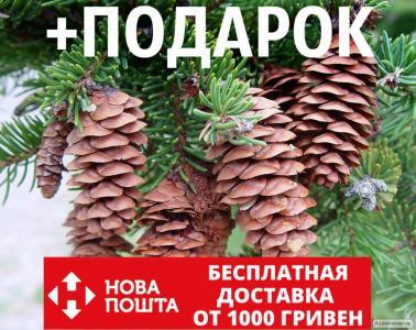 Ель белая семена (50 шт) (ель сизая канадская, Picea glauca)