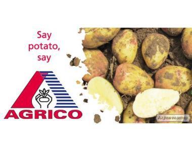 Продам картоплю насіннєву