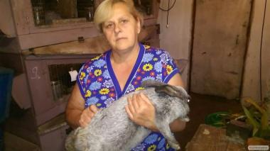 кролики великаны и серебристый