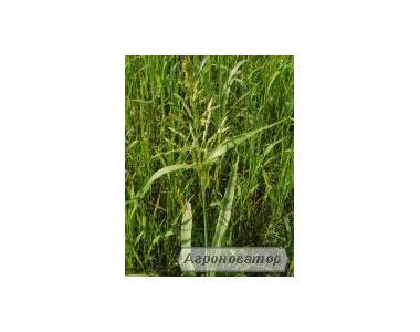 Реализуем семена суданской травы
