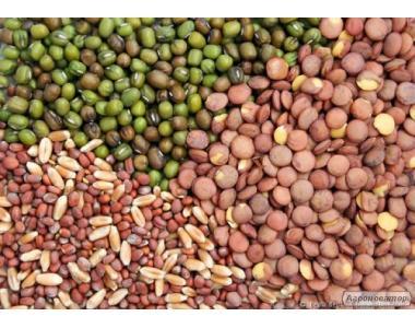 утилизация просроченного или испорченного зерна по Украине