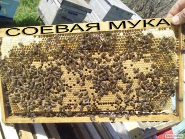Весняній підгодівлі бджіл після обльоту