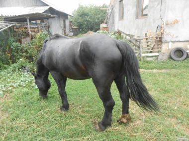 продам хорошего рабочего коня