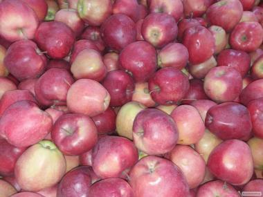 Продам яблоко от производителя от 10 тон