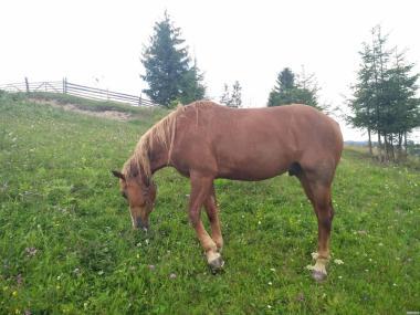 Кінь Конь
