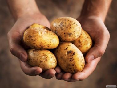 Оптовий продаж картоплі від Компанії ТОВ