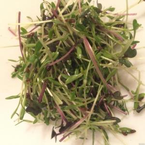 Микрозелень