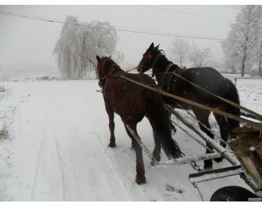 продам коня або кобилу