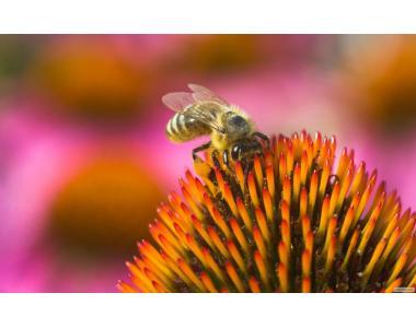 Колекція відео фільмів про бджільництво
