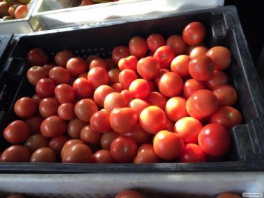 Предлагаем томат тепличный красный. Также зеленый на засол