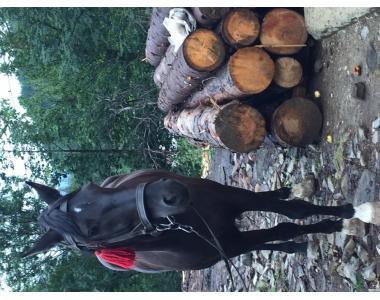 Продам коня 5 років