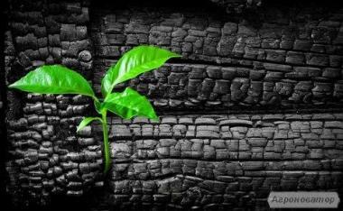 Деревне вугілля сосна, вільха