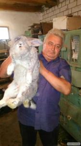 кролі велетні і полтавський сріблястий