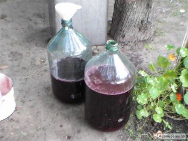 Продам вино сорта изабелла