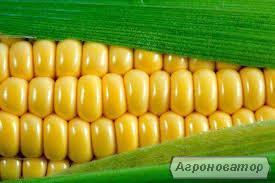 Кукуруза на экспорт CIF, FOB. Порт погрузки Одесса, 50 000 т