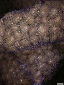 Продам картоплю сорт альвара, Чернігівська обл.