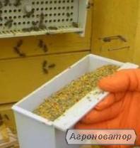 Продам квітковий пилок з власної пасіки