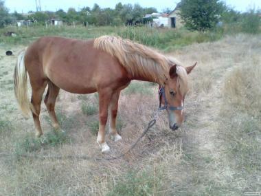 Продам лошадь,девочке 1 год.