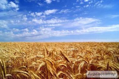 Спирт пшеничный люкс 96,6