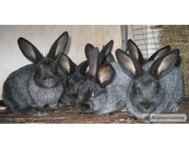 Комбікорми для кролів,клітки,кролематок тм