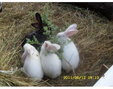 Продам крольчат различного возраста