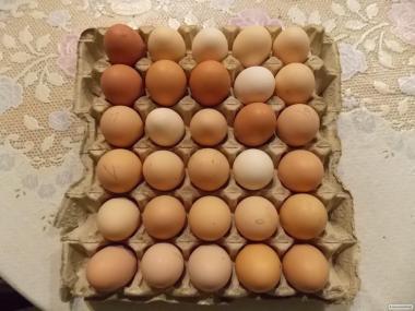 Продается яйцо инкубационное смешаных порд.