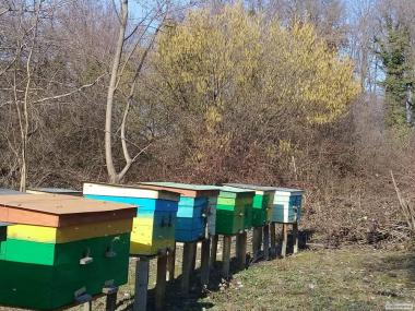 Пчелопакеты 2019 .