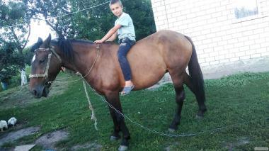 Тварини > Коні > Верхові коні