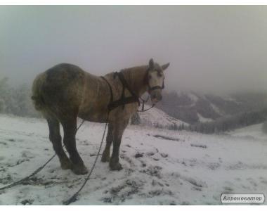 хорошая рабочая лошадь!!!