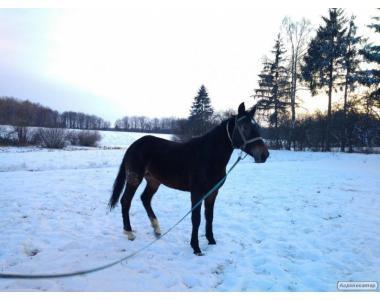 Продається нарядна кобила