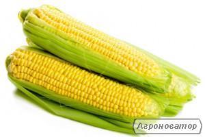 Продам некласну кукурудзу 14 зернова вол 12-13,7 %