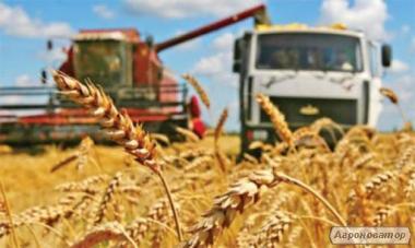 Перевезення зерна і зернових вантажів по Україні
