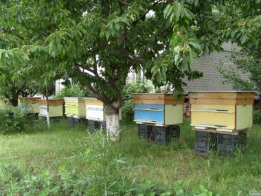 Пчелосемьи, 2200