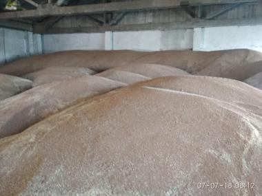 Продам Пшеницю оптом. 2 і 3 клас, фураж.